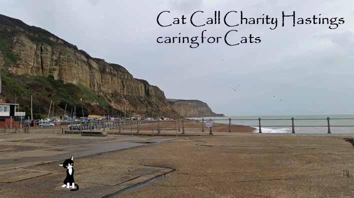 Cat Call Charity Hastings