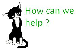 Cat Call How can we HELP