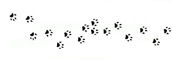 Cat Call foot prints