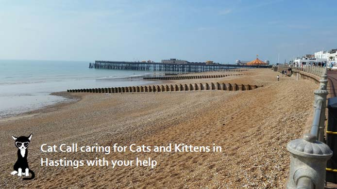 Cat Call caring for Cats and Kittens in Hastings