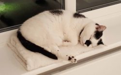 Poppy at Cat Call