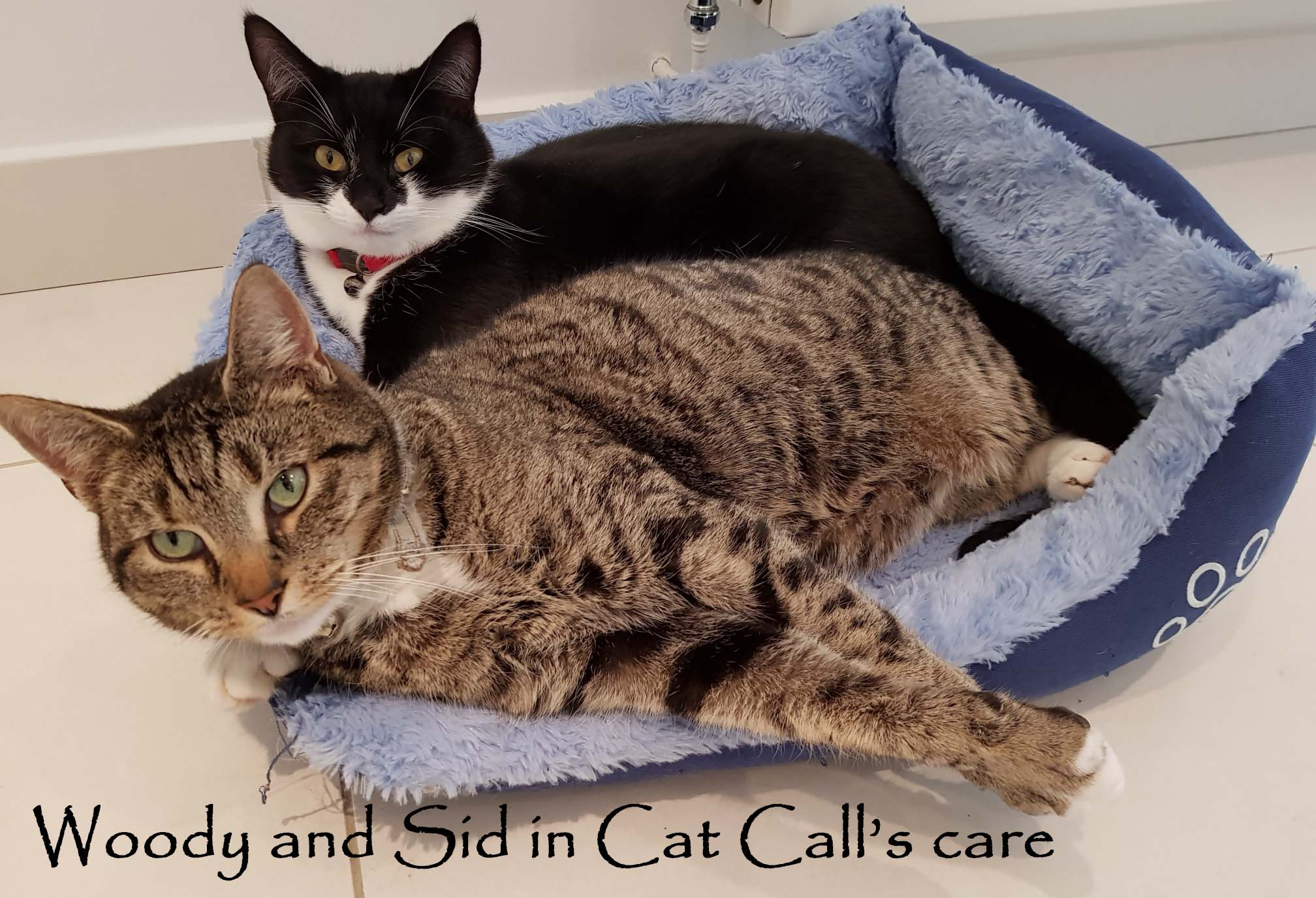 Cat Call caring for Cats