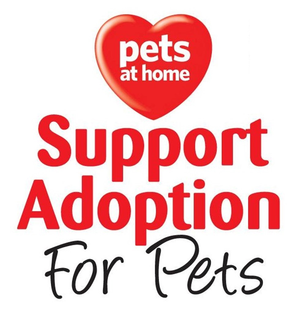 Cat Call and Support Adoption For Pets