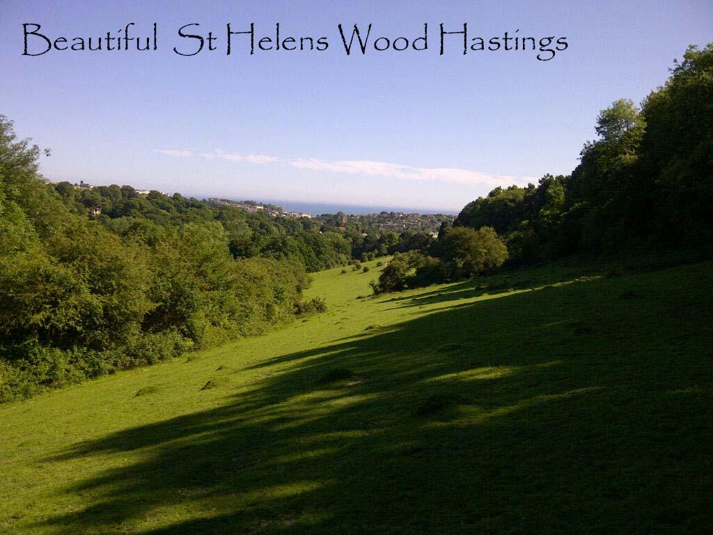 Beautiful St Helens Wood Hastings