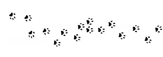 Cat Call foot prints