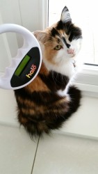 Cat Call chip scanner