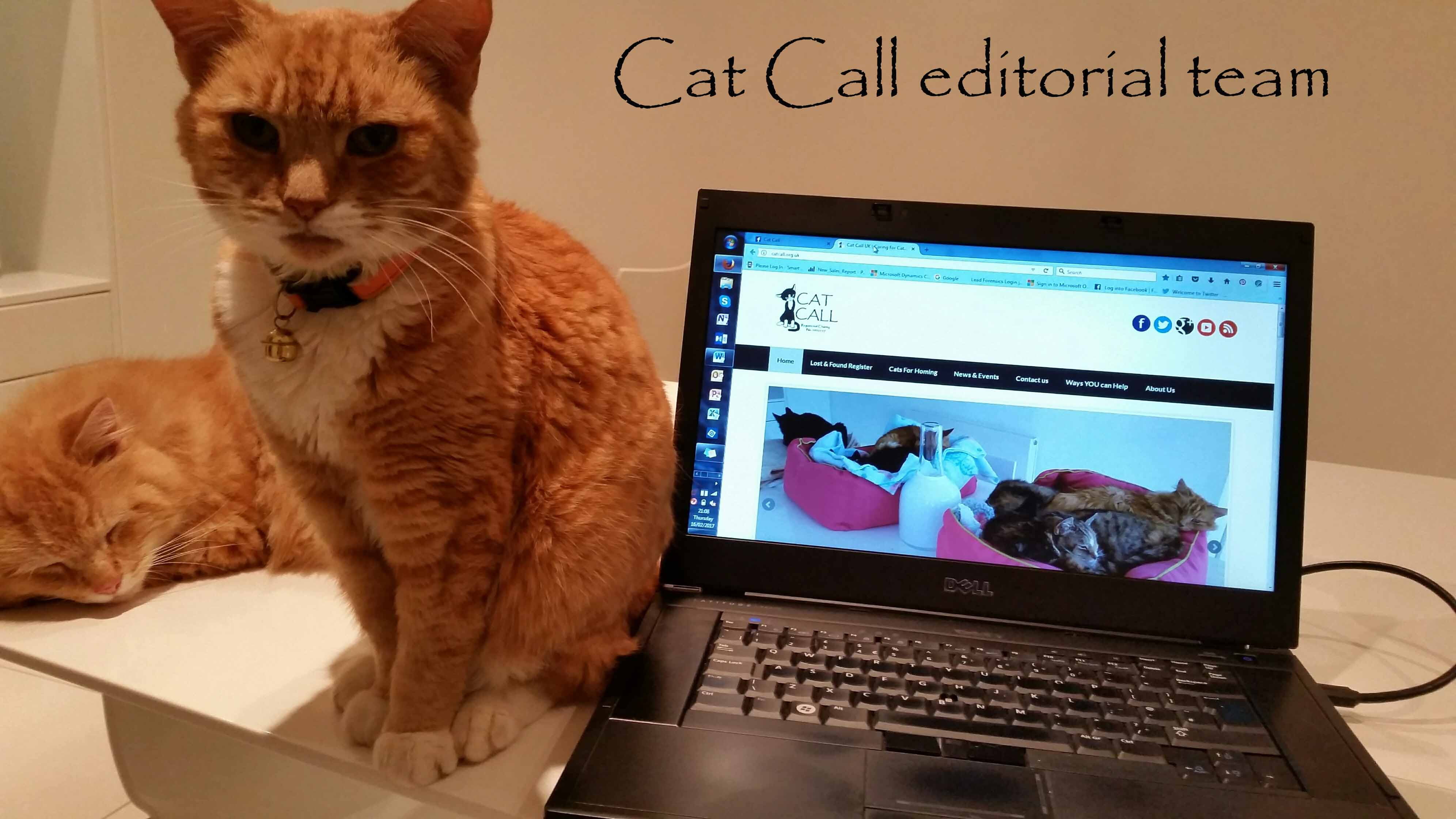 Cat Call charity editorial team