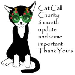 Cat Call Charity 6 month update