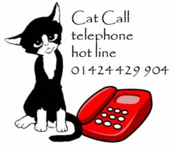 Cat Call hot line 01424 429904