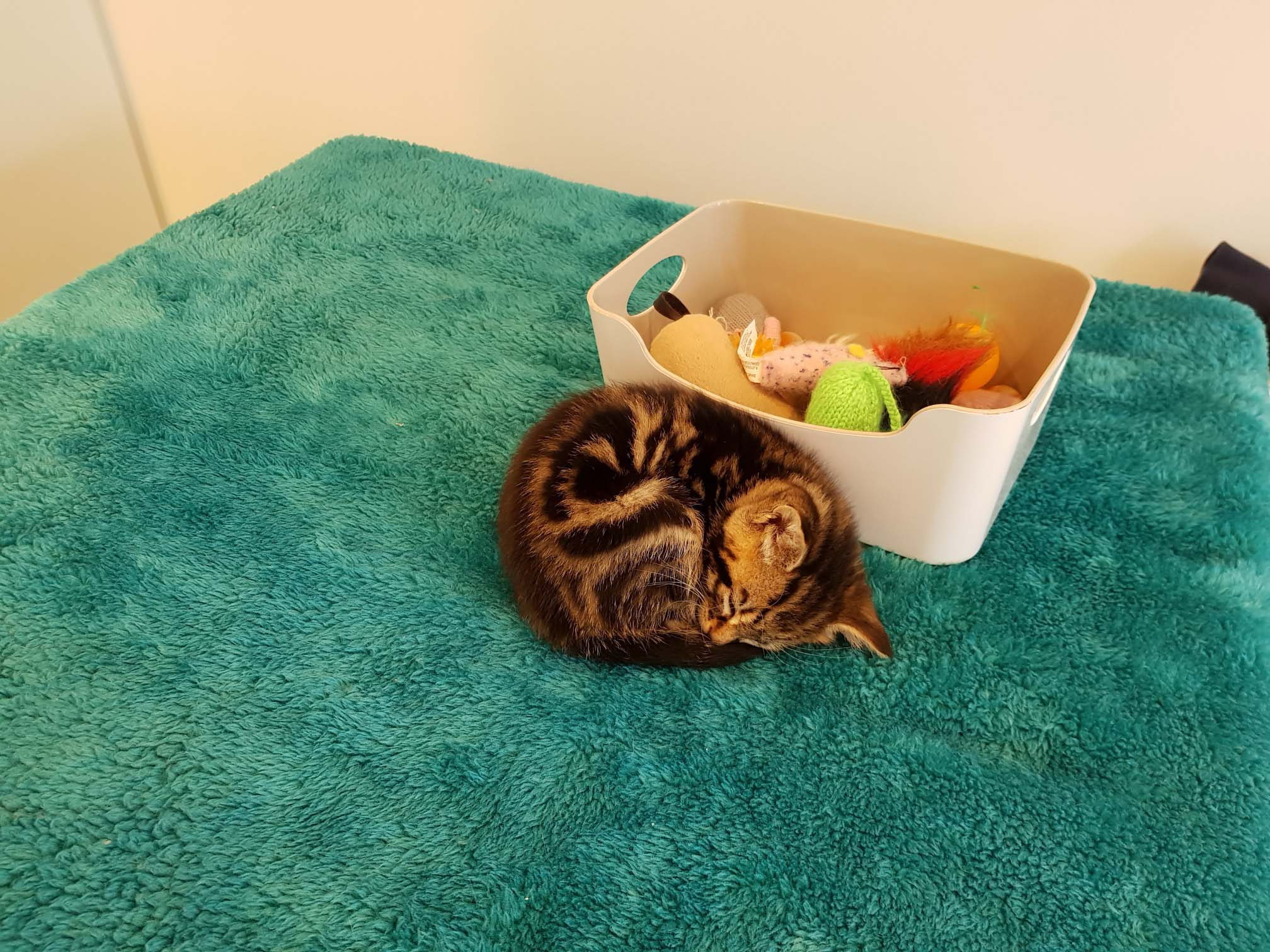 Teddy kittten and his toy box