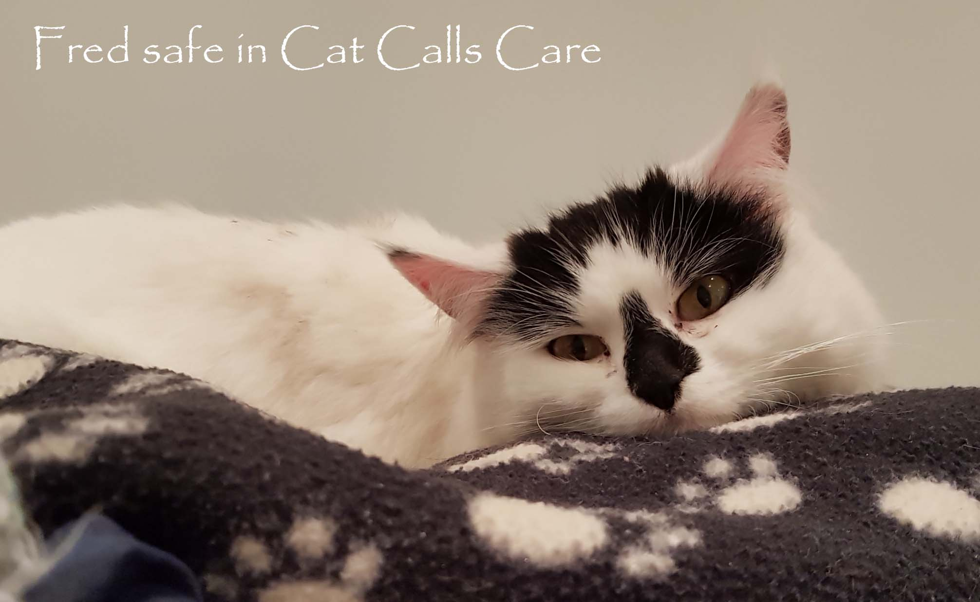 Fred safe in Cat Calls care
