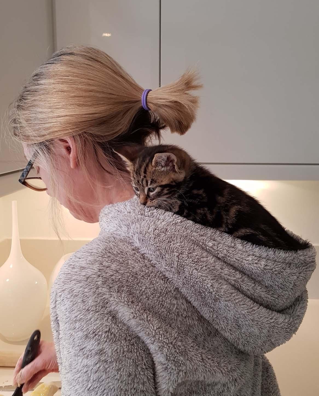 Teddy kitten