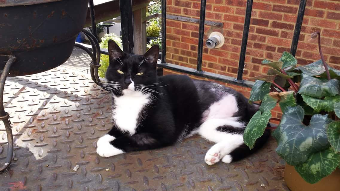Cat missing from Woodland Vale Road St Leonards On Sea