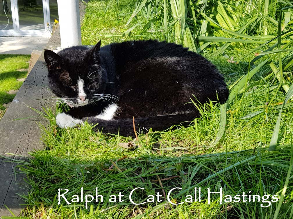 Ralph at Cat Call Hastings