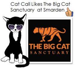 Cat Call Likes The Big Cat Sanctuary