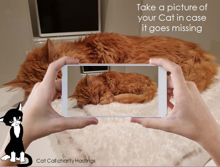 Take a picture of your Cat