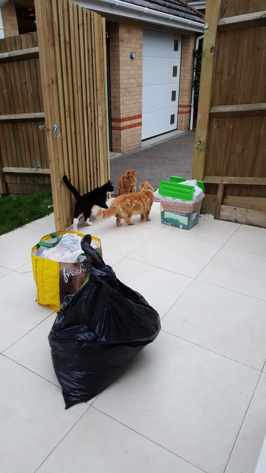 The Cats helping