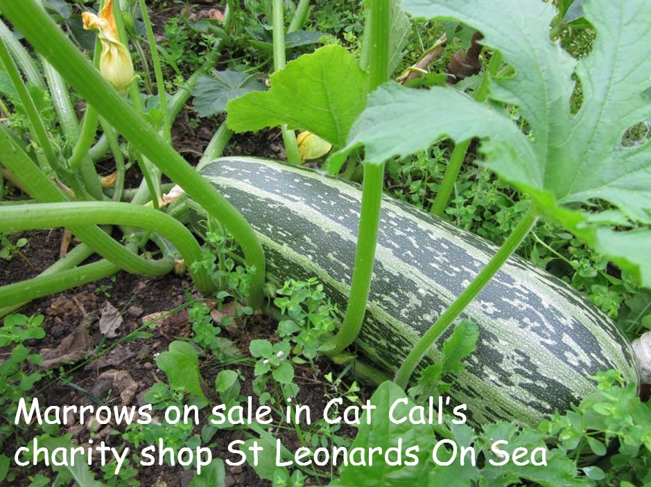 Fresh home grown marrows at Cat Call