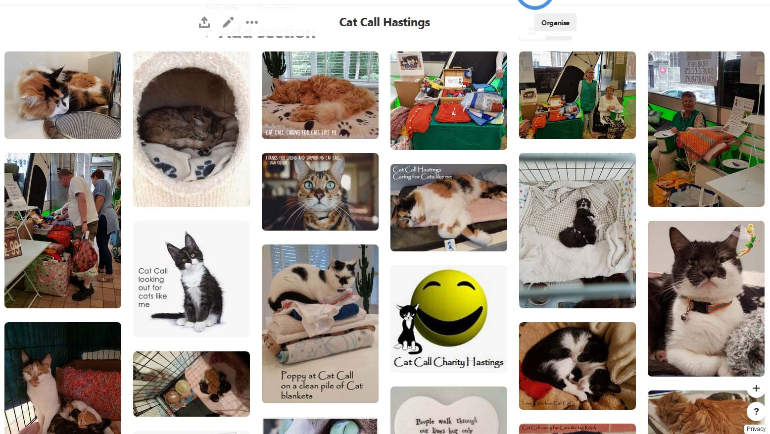 Cat Call On Pinterest