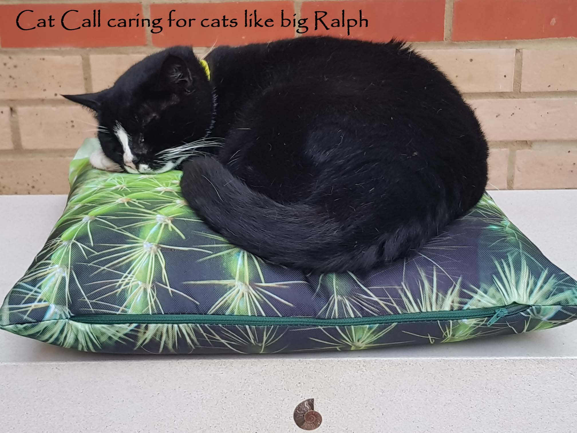 Cat Call caring for Cats like Big Ralph