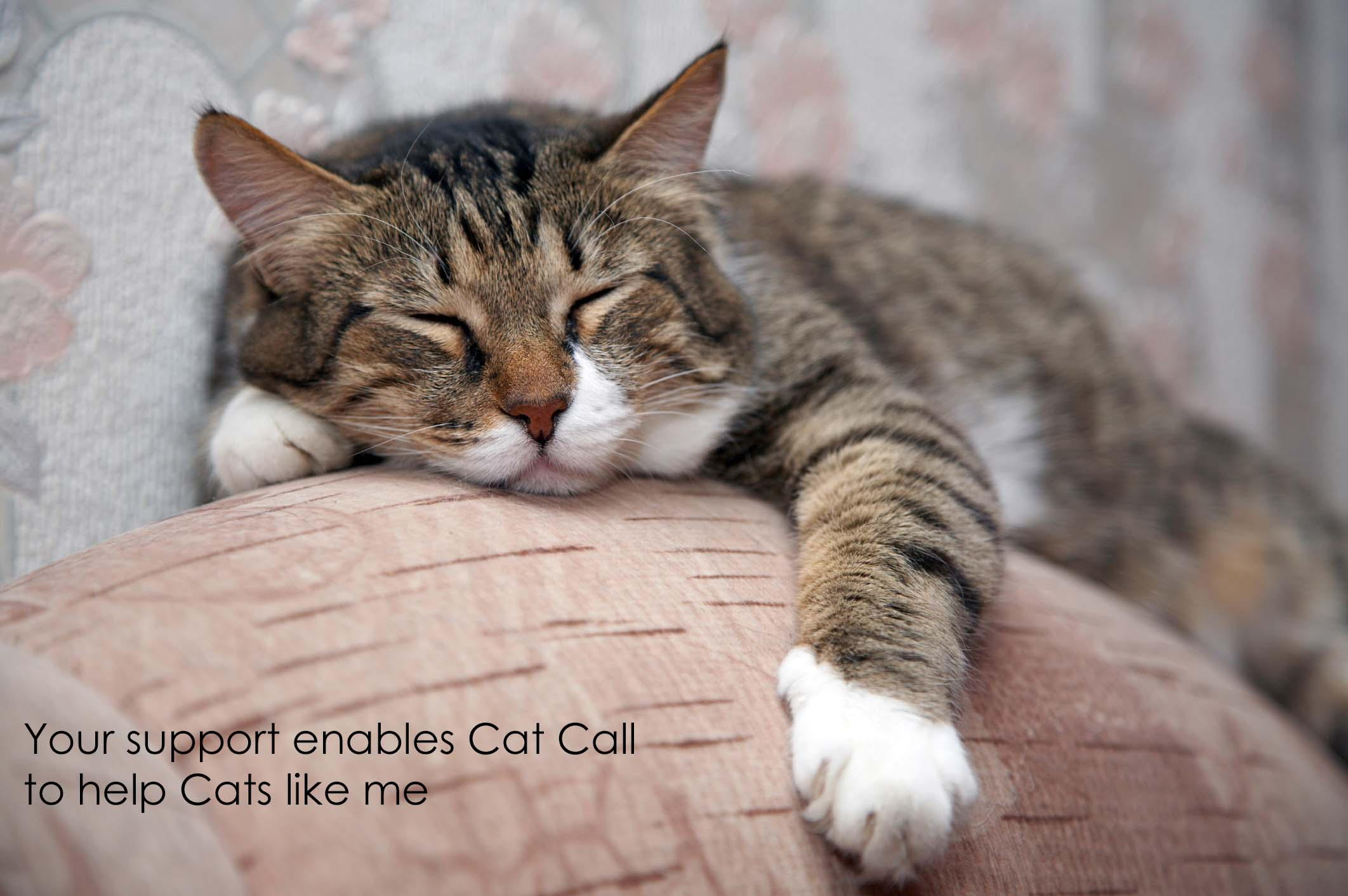Your support enables Cat Call to help Cats like me