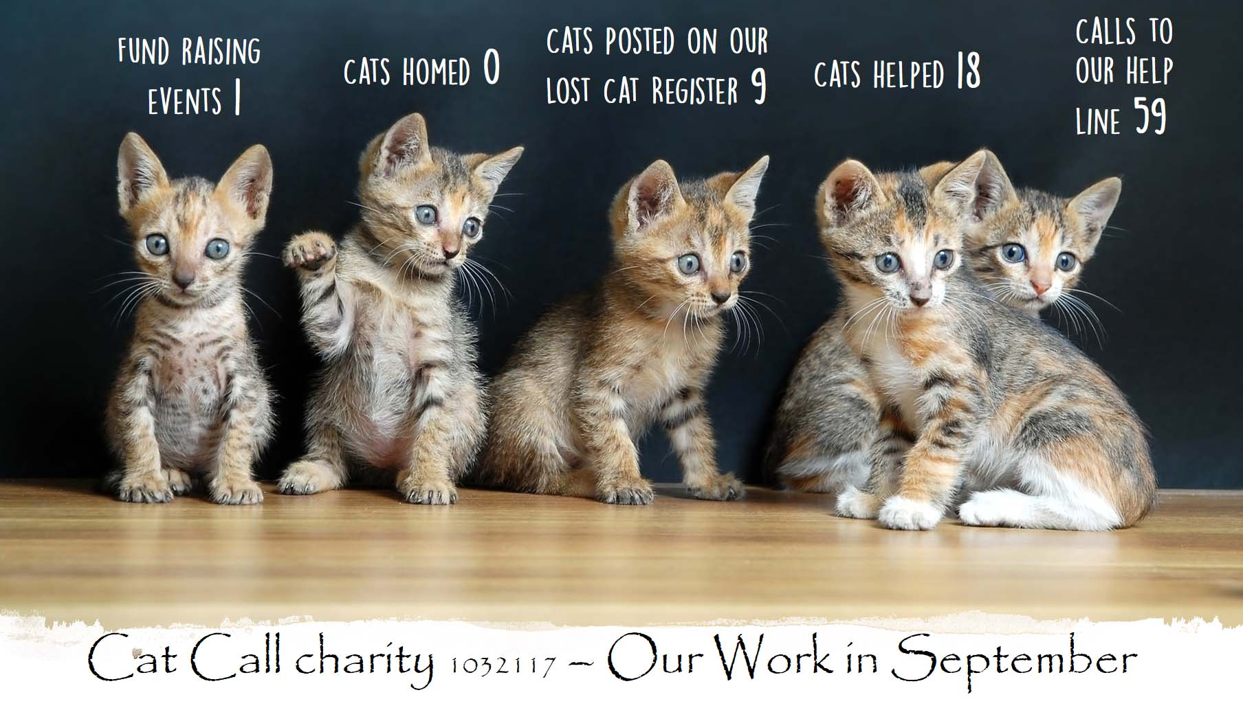 Cat Call Charity - Our work in September