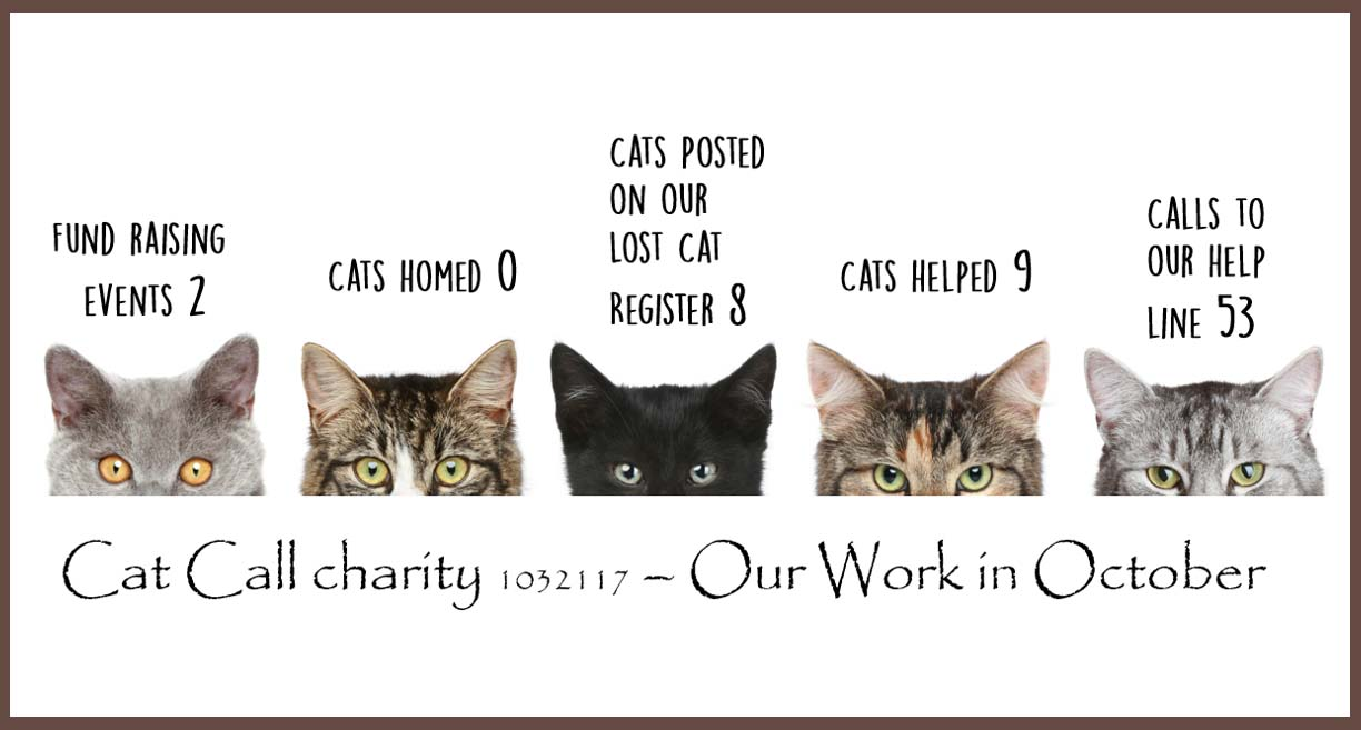 Cat Call charity our work in October