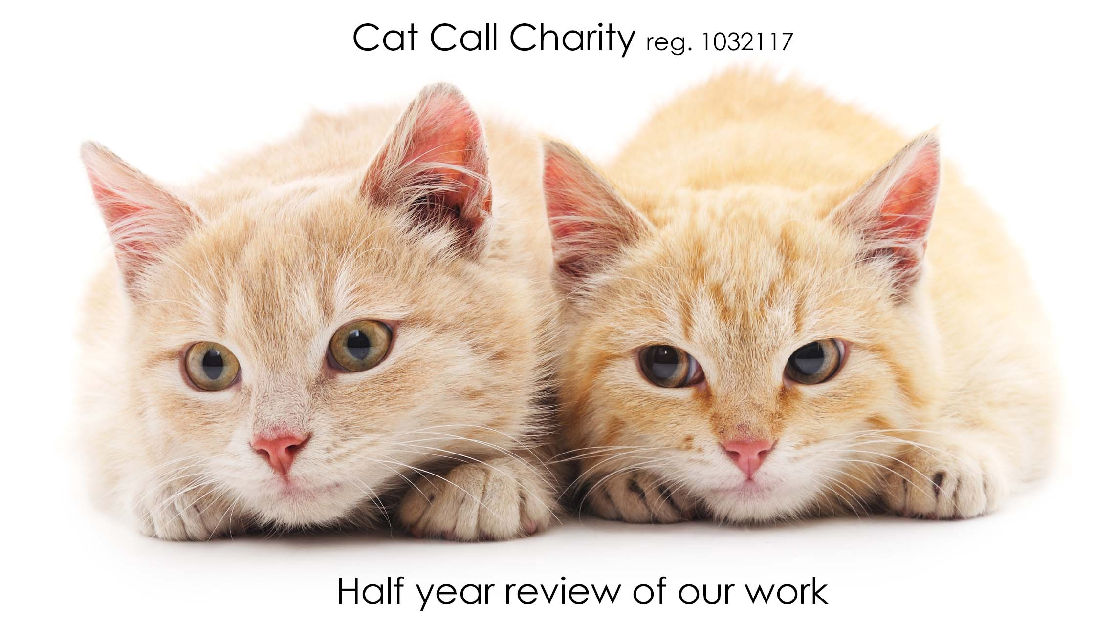Cat Call Charity half year review 2018