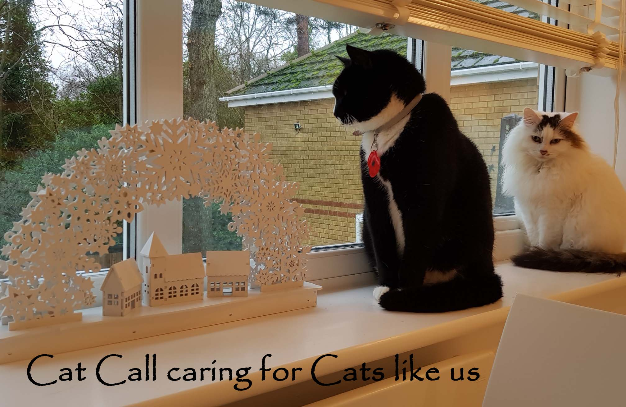 Cat Call caring for Cats like us