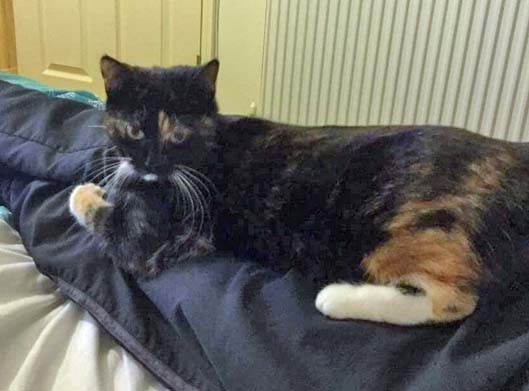Cat missing from Woodlands Way Hastings