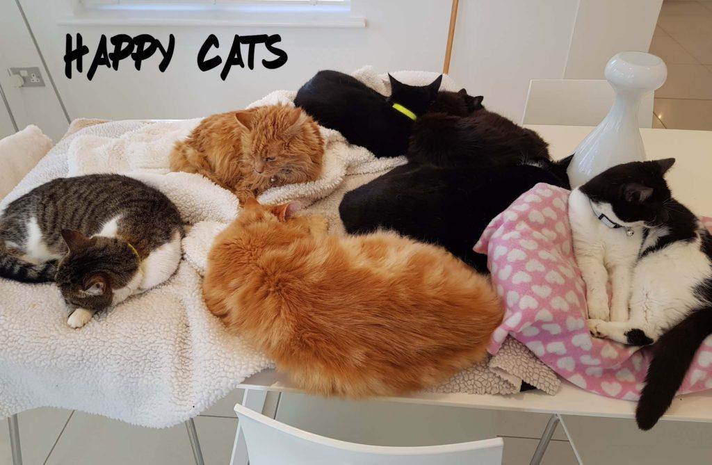 Happy Cats x