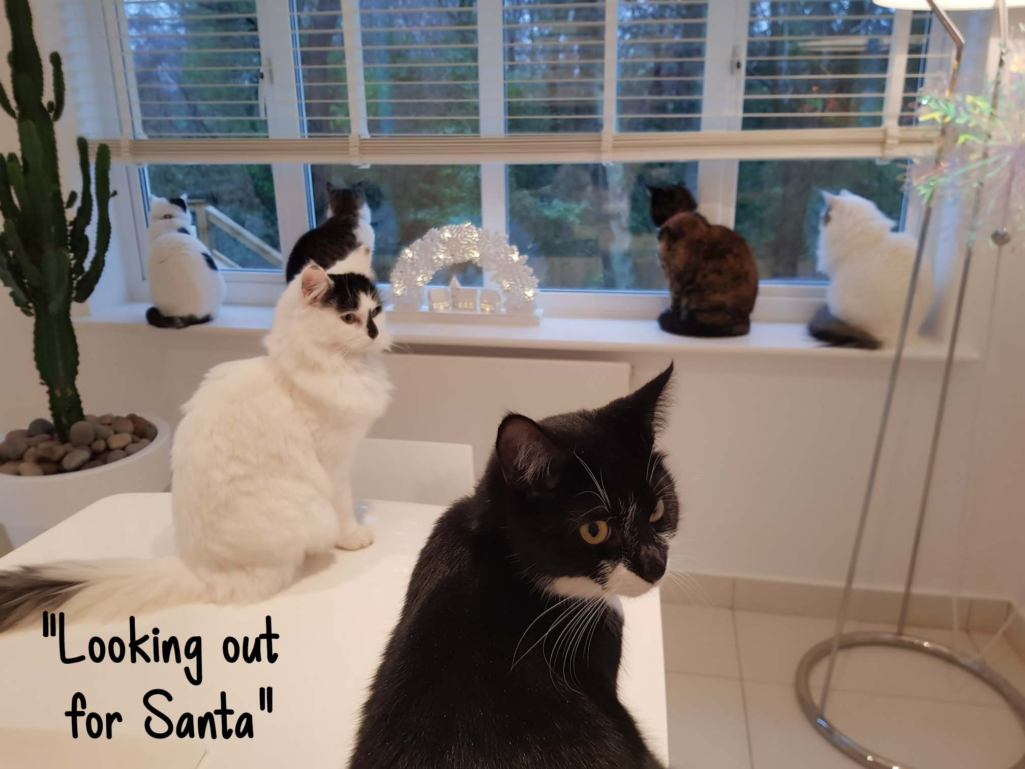 Looking out for Santa