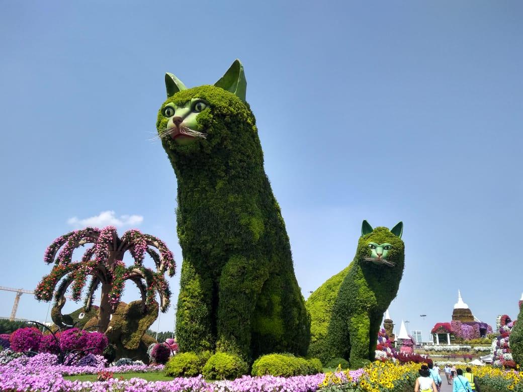 Miracle garden Cats Dubai