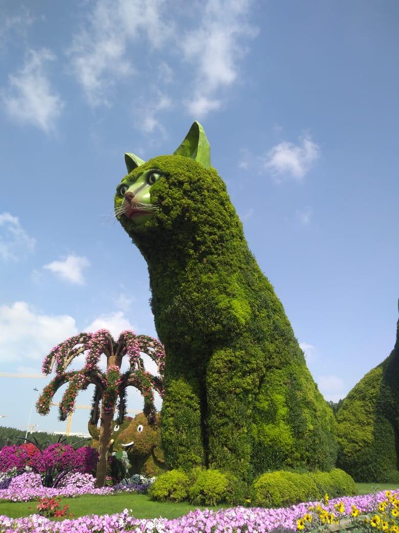 Miracle garden Cats in Dubai