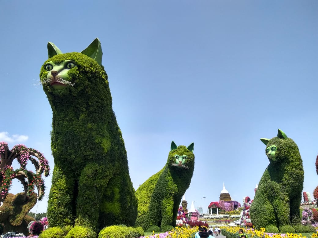 Miracle garden Cats