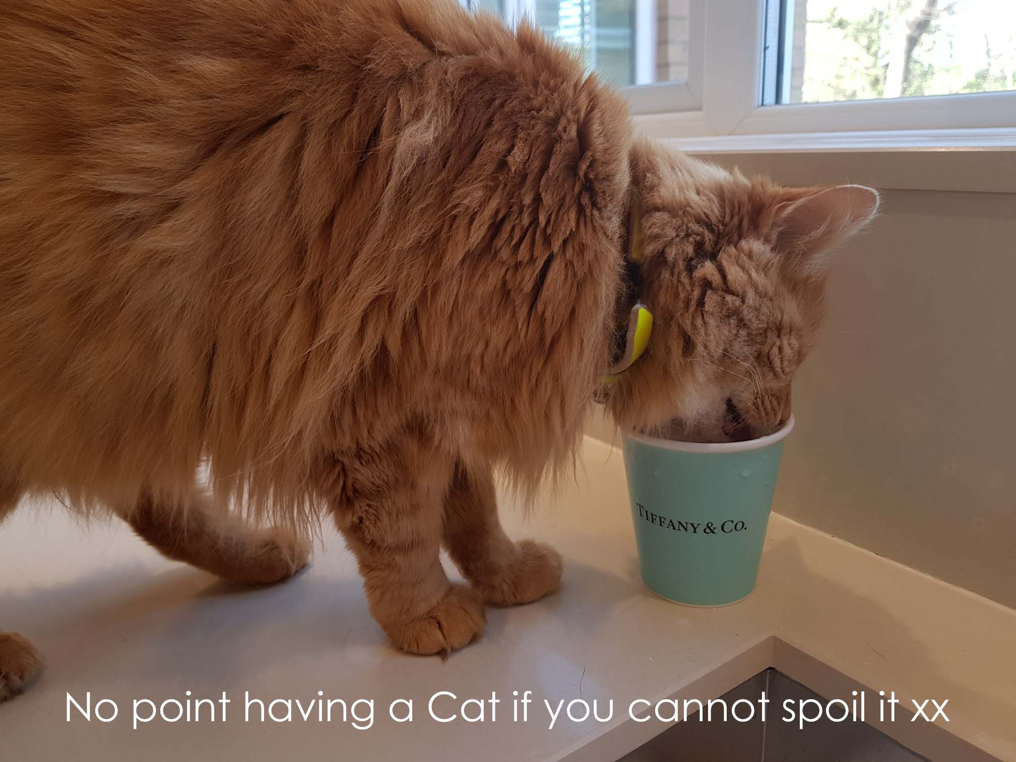 Spoil your Cat xx