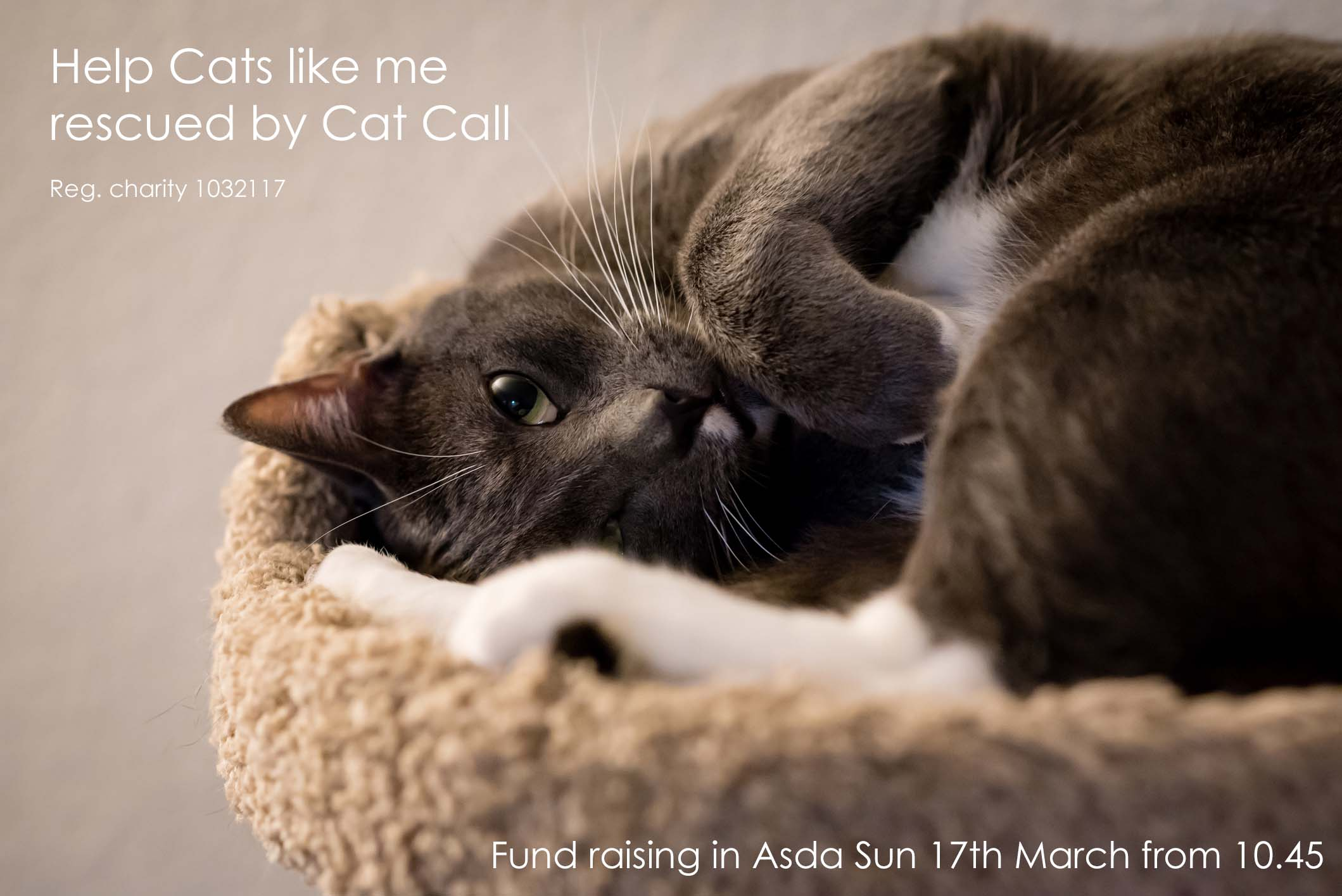 Cat Call in Asda Sunday 17th March