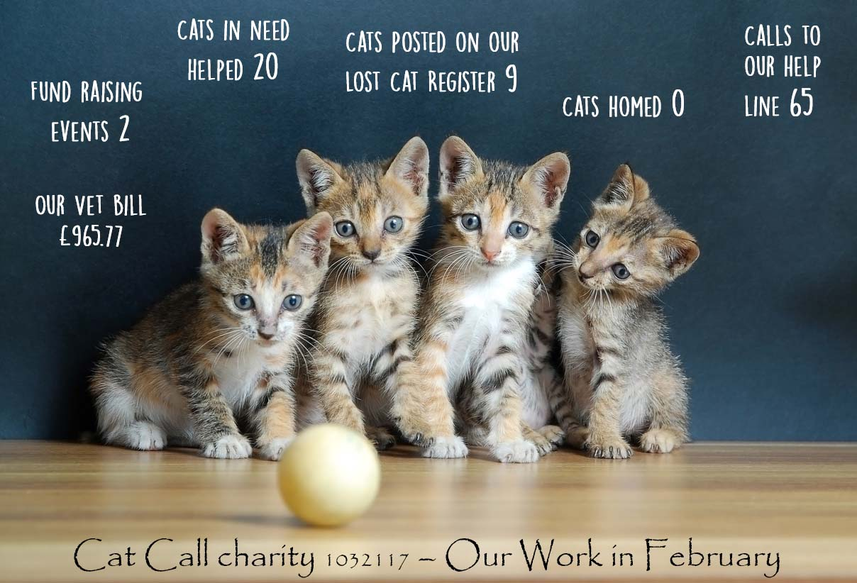 Cat Call our work in February
