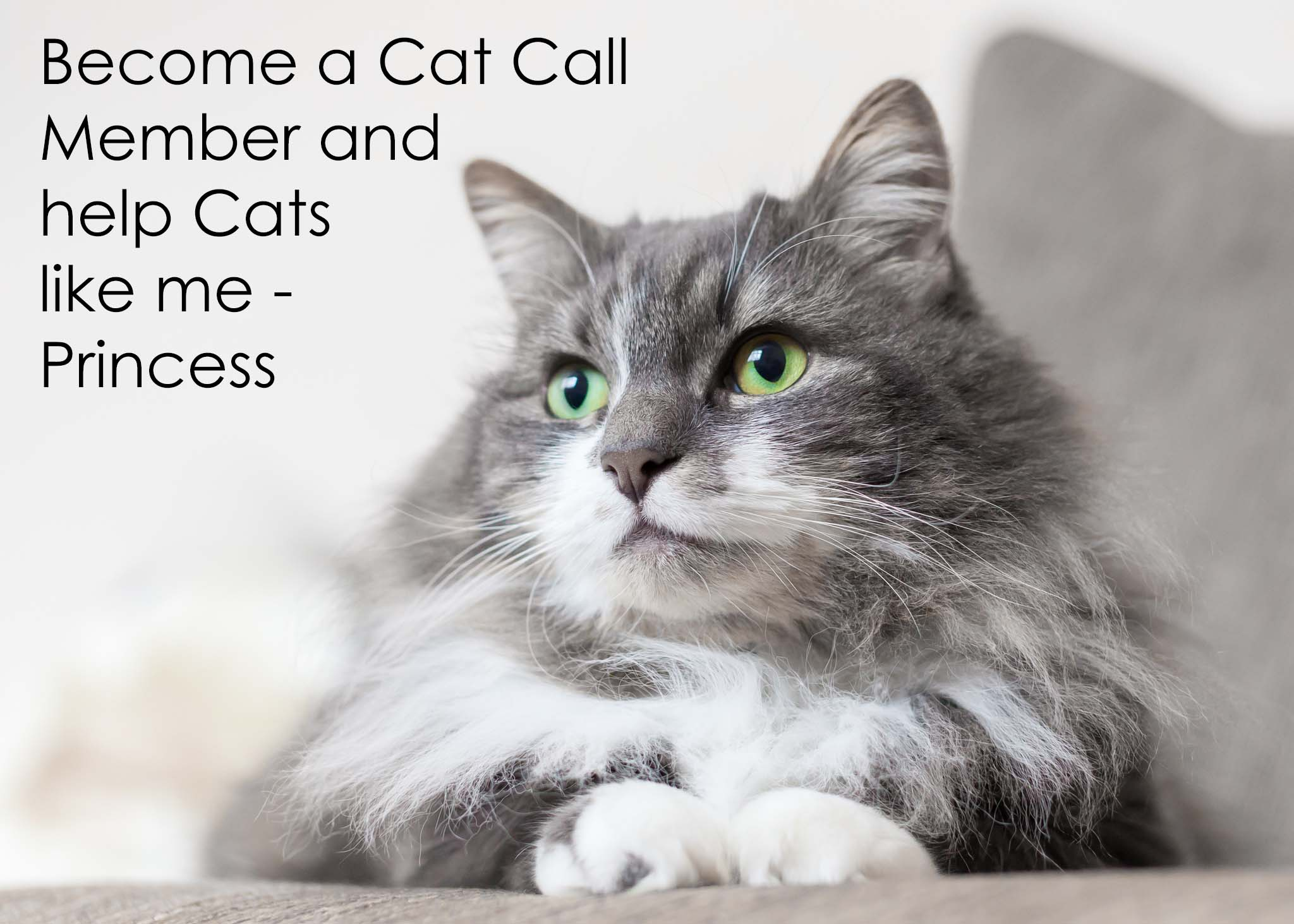 Become a Cat Call Member