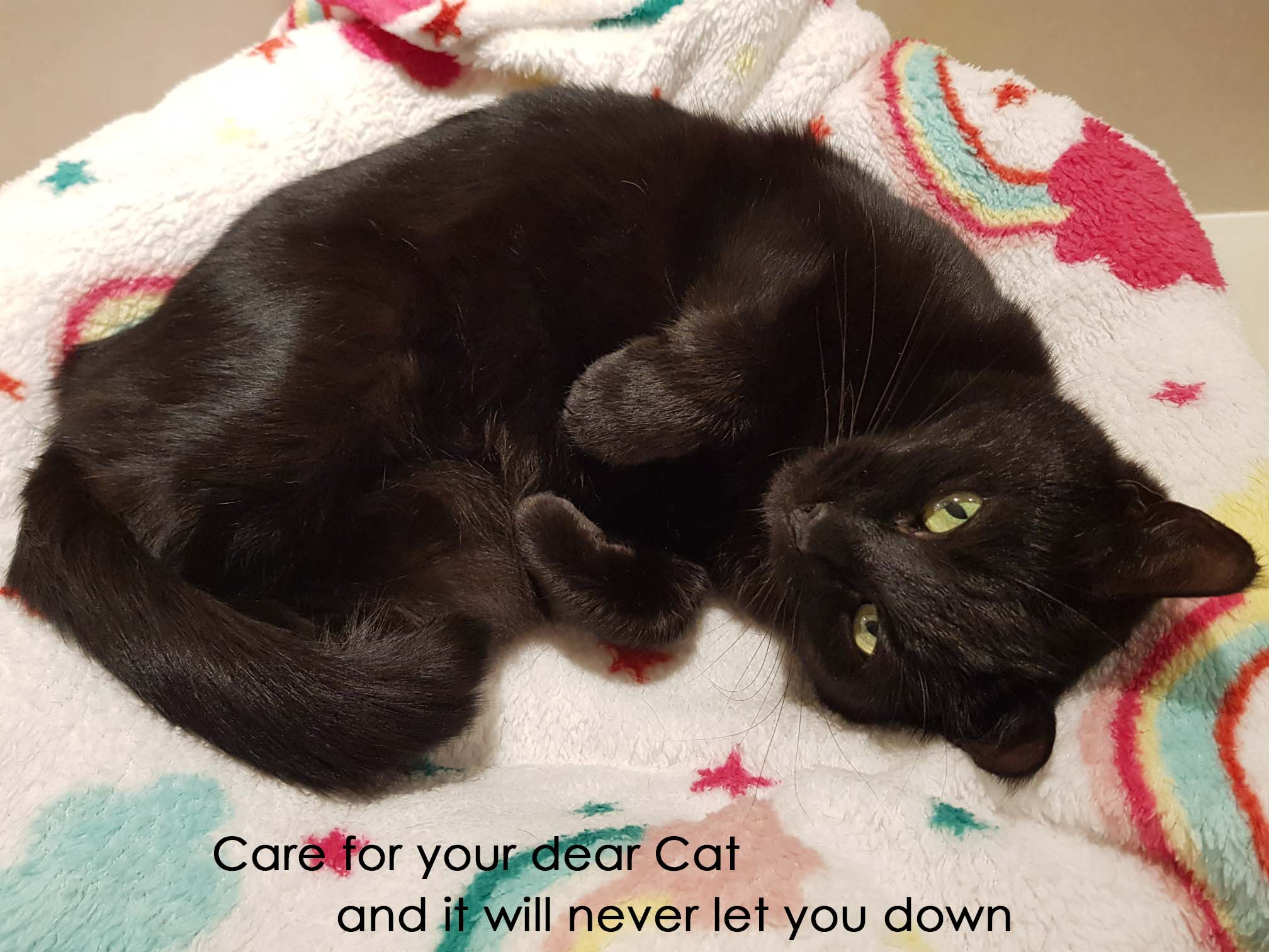 Care for your dear Cat