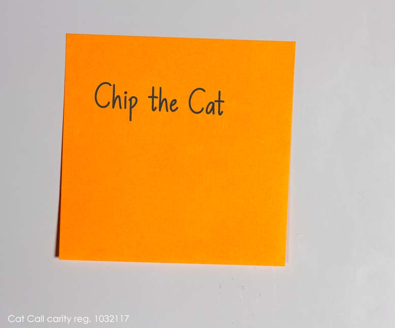 Chip the Cat x