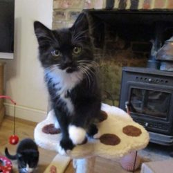 Dusty homed by Cat Call