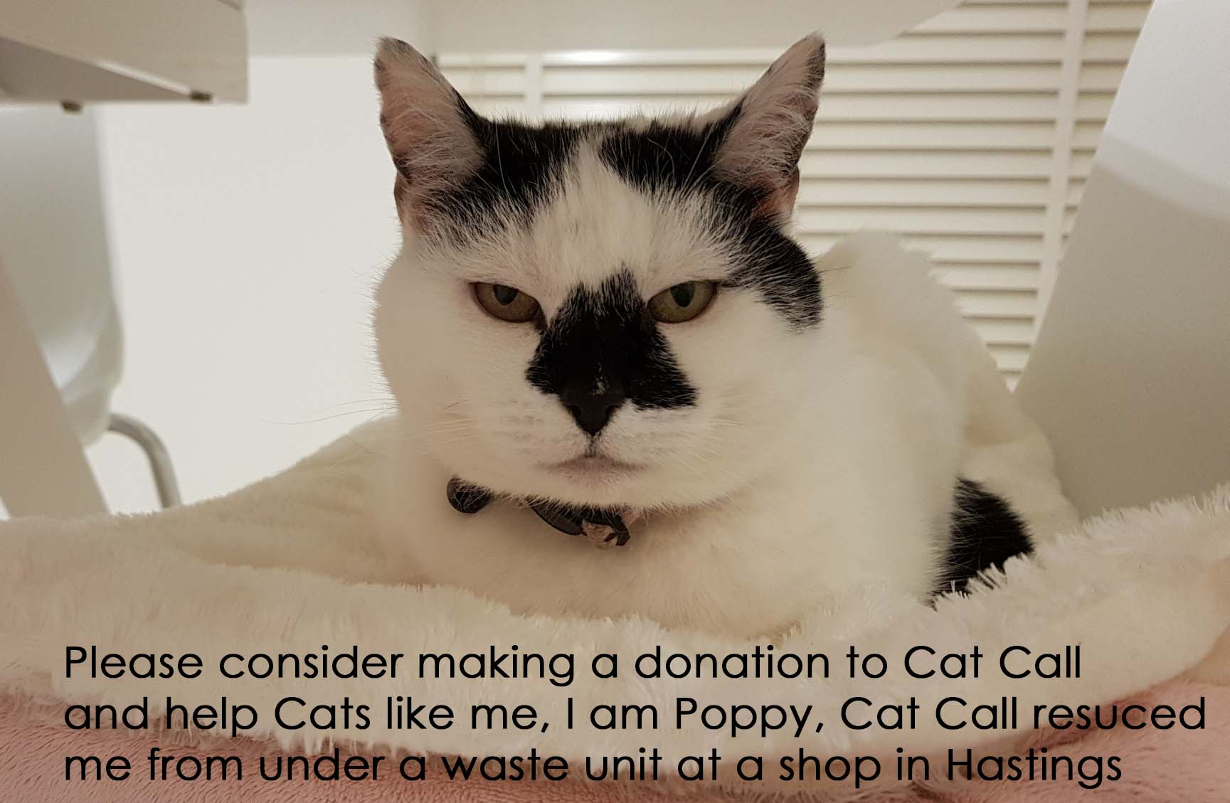 Please make a donation to Cat Call