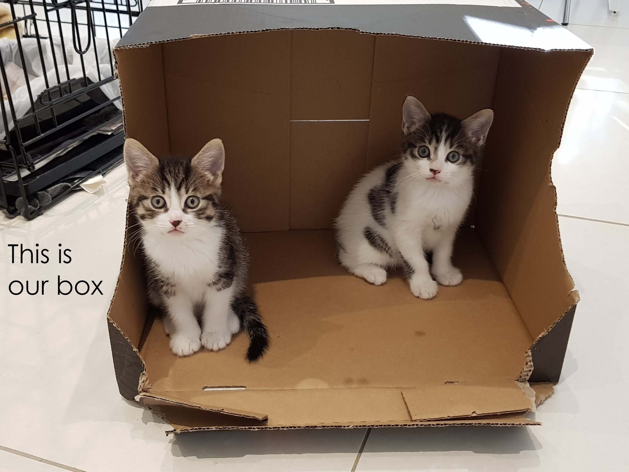 This is our box @ Cat Call