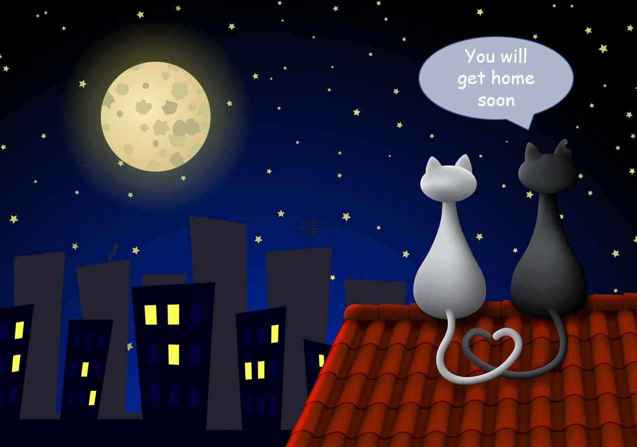 This image has an empty alt attribute; its file name is Get-home-with-Cat-Calls-help.jpg