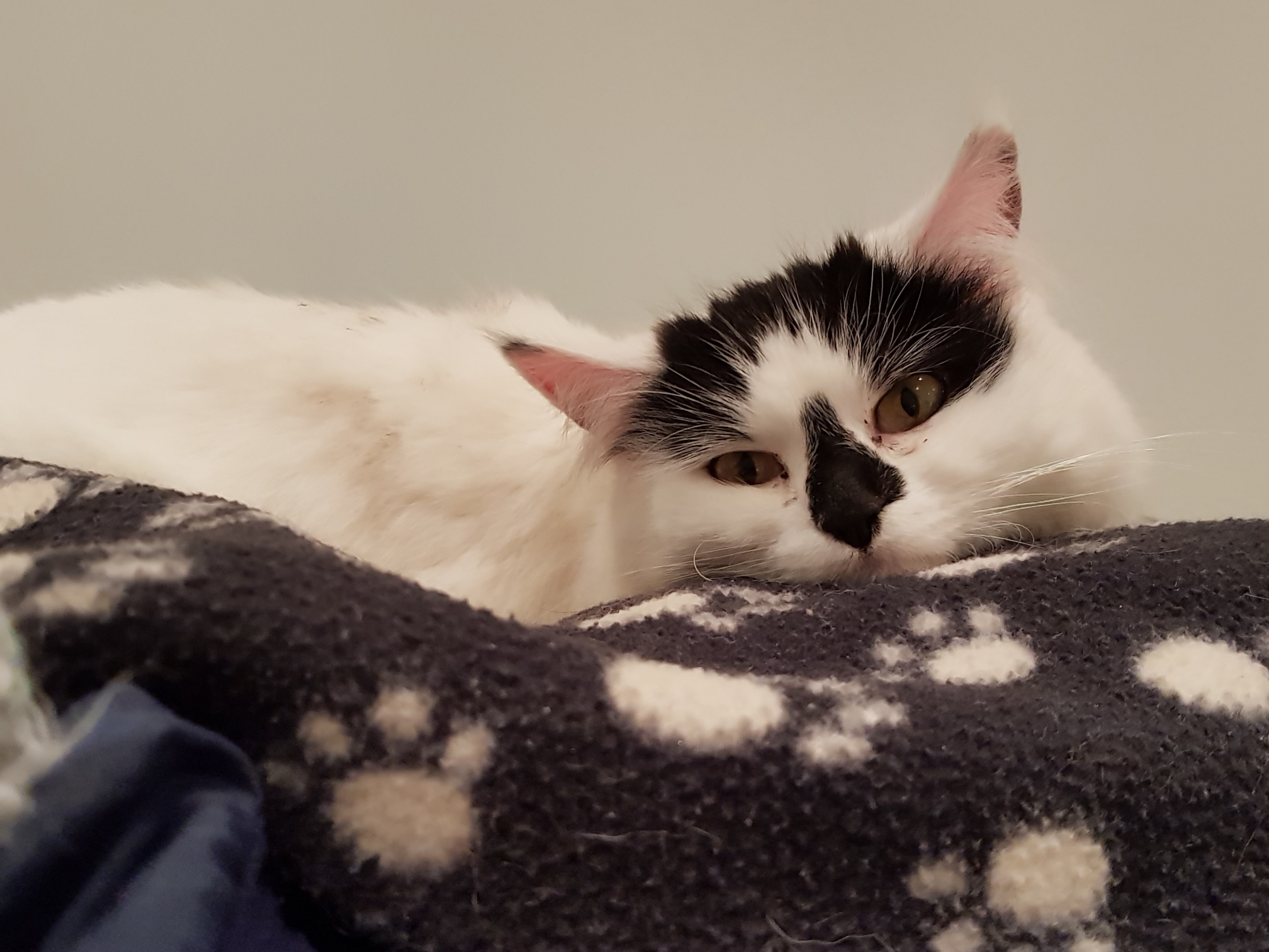Fred Cat in Hastings