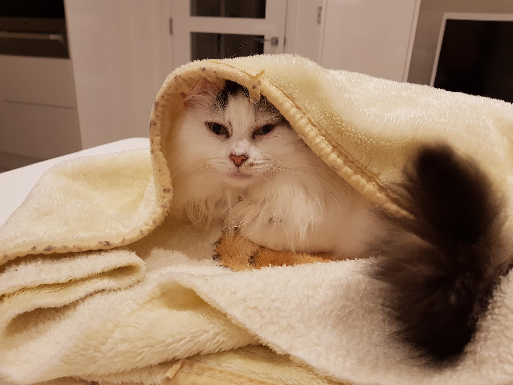 Sponsor a Cat @ Cat Call