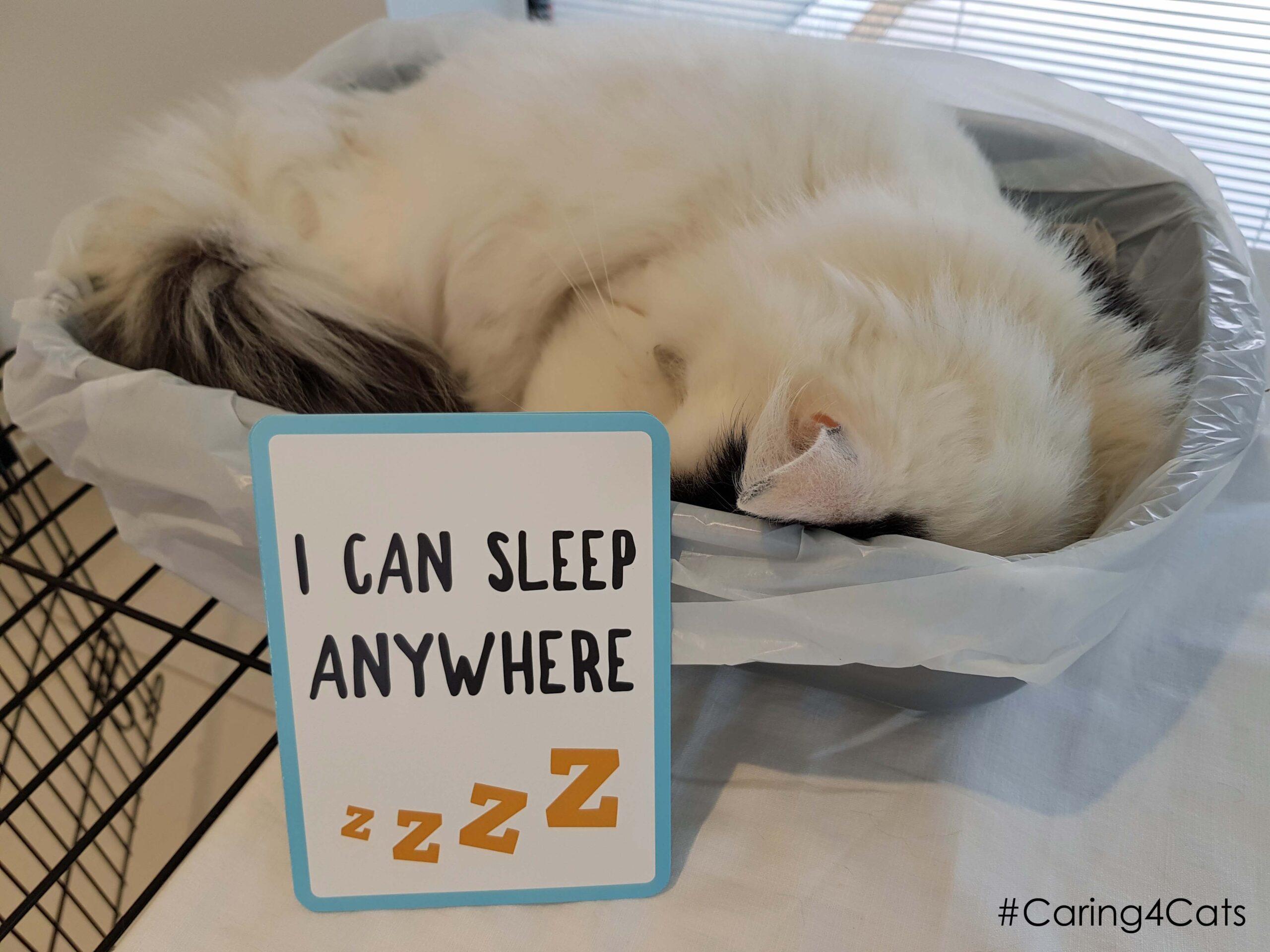 Sponsor a rescued Cat