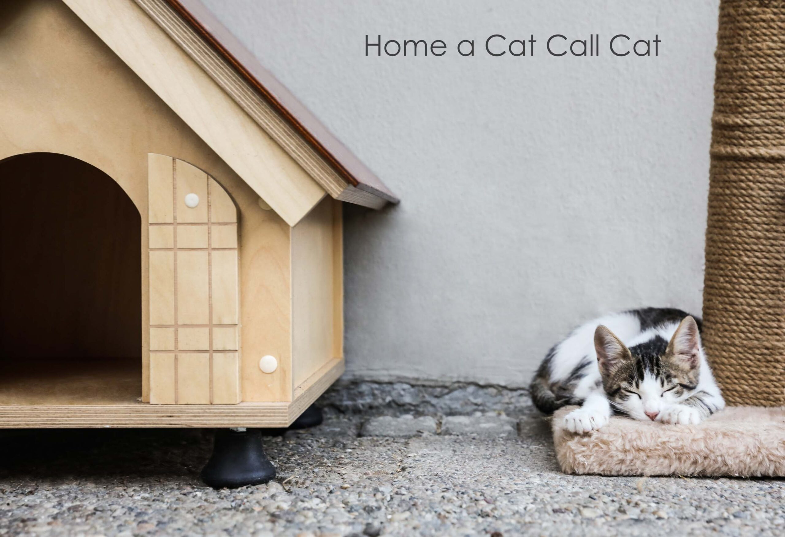 Give a Hastings Cat a home