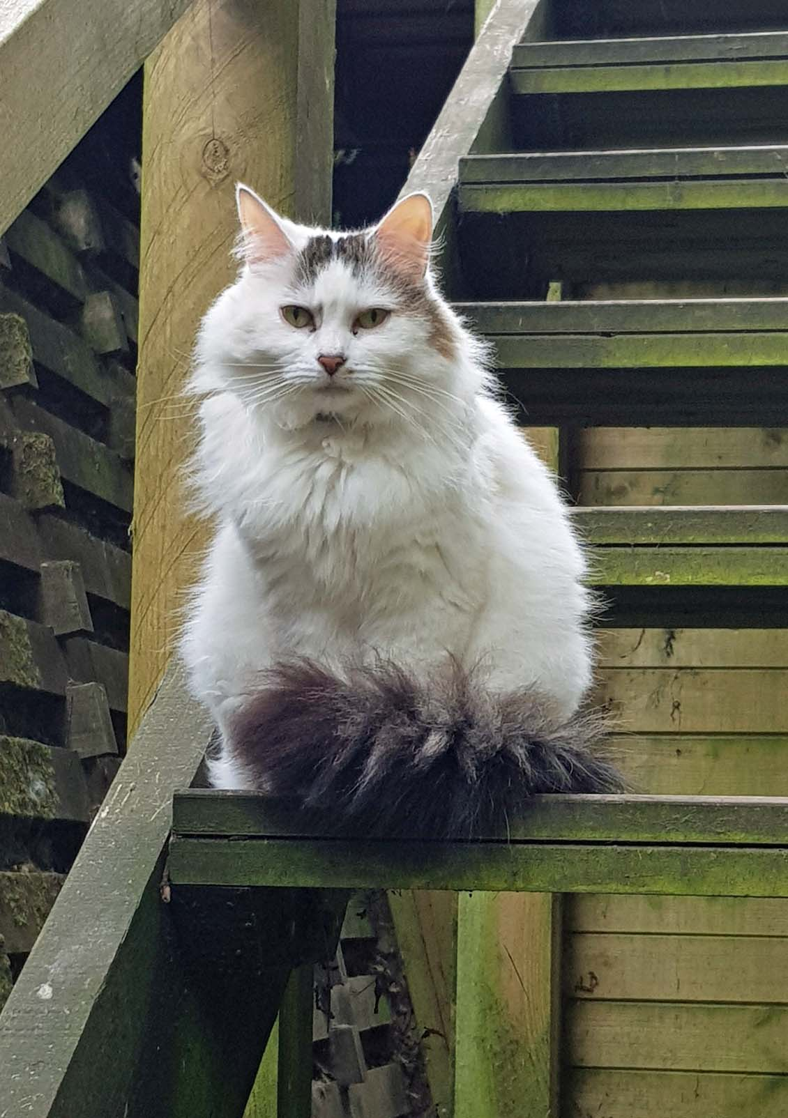Snowdrop happy at Cat Call